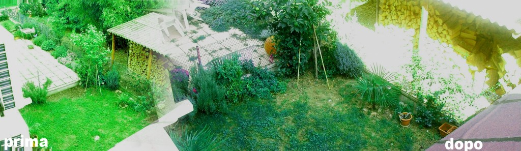 Talpe in giardino come eliminarle uno dei blog for Talpe in giardino